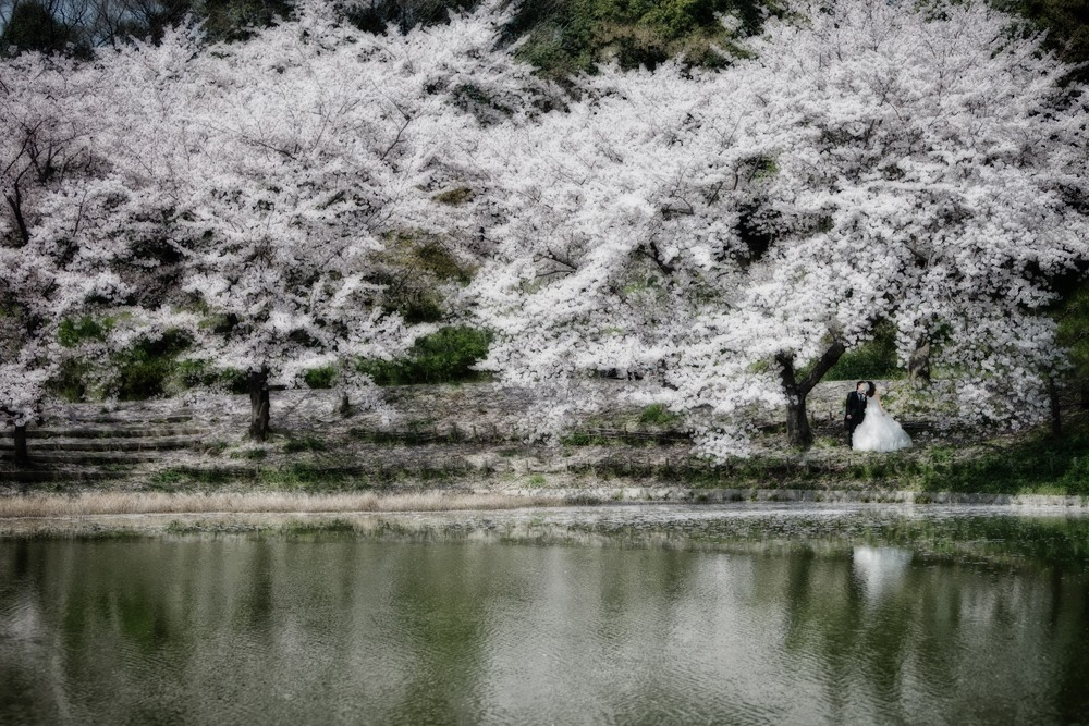 中田しのぶ 作品集