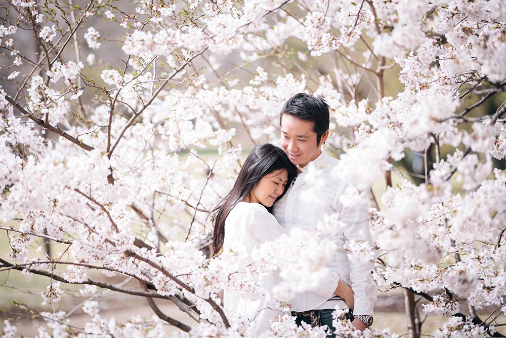 【春の季節。桜とエンゲージメントフォト】